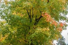 A Trace Of Autumn Stock Photos