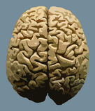 Trace brain Royalty Free Stock Images
