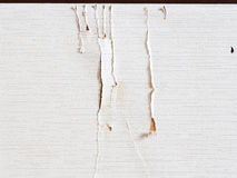 The trace of cat scratching on Japanese Fusuma door Stock Images