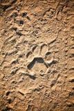 Trace de lion Image libre de droits