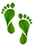 Trace foot from leaves. Trace foot from green leaves Stock Image