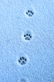 Trace. Hare trace on a fresh snow royalty free stock photos