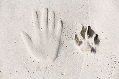 Trace of human hand and dog paw on the sand Royalty Free Stock Photos