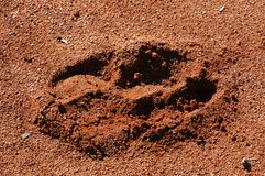Trace legs of kangaroo Stock Image