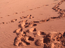 Trace in Red sands Royalty Free Stock Images