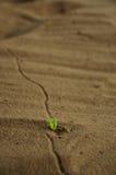 trace roślinnych Zdjęcia Stock