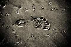 Trace on sand Royalty Free Stock Photos