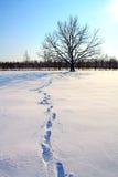 Trace on snow Stock Photos
