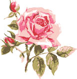 Trace vector of elegant rose Royalty Free Stock Photos