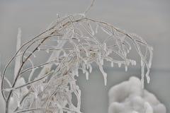 Tracery delicado del hielo Imagen de archivo libre de regalías