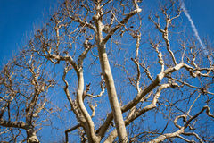 Tracery of leafless branches against a blue sky Royalty Free Stock Images
