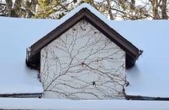 Tracery venoso de una vid definida por las nevadas frescas Imágenes de archivo libres de regalías