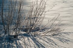 Branch in frost in a field covered with fresh white snow on a sunny winter morning. stock photos
