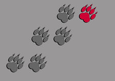 Traces of animal paws. Traces of a large animal with claws on a gray background Stock Photos