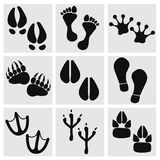 Traces of animals, birds, people Royalty Free Stock Photo