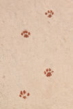 Traces of animals painted. Royalty Free Stock Images