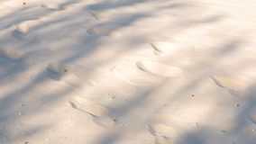 Traces of animals and people on the sand beach. Traces of animals and people on the sand beach stock footage