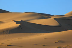 The traces of animals on sand Royalty Free Stock Photography