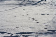 Traces of animals in snow. Deer, moose, wolf, fox, dog, cat paws footprints in the forest. royalty free stock photos