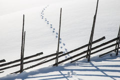 Animal tracks in the snow. Traces of animals in the snow with a wooden fence that provides a beautiful shadow in the snow Royalty Free Stock Images