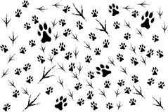 traces of animals Stock Image