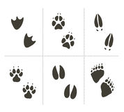 Traces of animals Royalty Free Stock Photos