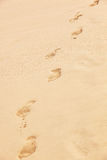 Traces of bare feet Stock Images