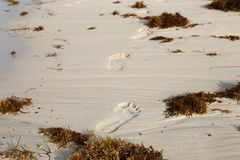 Traces of bare feet on sand beach.  royalty free stock photos
