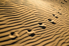Traces of the beast on the sand in the desert.  Royalty Free Stock Photo