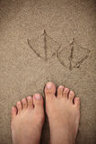 Traces of a bird and a human in the sand. Stock Images