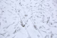 Traces of birds feet on fresh snow. Birds sitting on fresh snow leave traces. Often there are so many of them that it is difficult to distinguish what kind of Stock Photography