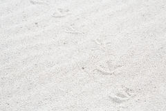 Traces of birds in the sand on the beach Royalty Free Stock Image