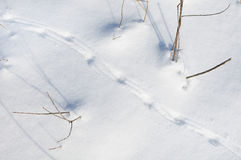 Traces of the birds on  snow Stock Photo