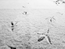 Traces of birds in the snow in winter royalty free stock images