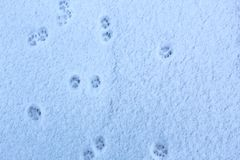 Traces of cat feet on freshly fallen snow royalty free stock image