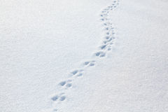 Traces of a cat on snow Stock Photography