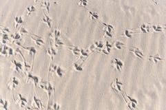 Traces compliquées d'empreinte de pas d'oiseau Photo libre de droits