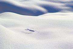 Traces d'aile sur la neige. Photo libre de droits