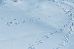Traces d'animal sur la neige photographie stock libre de droits