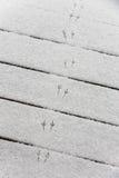 Traces d'oiseau dans la neige fraîche Images libres de droits