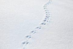 Traces d'un chat sur la neige Photographie stock