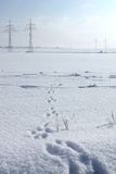 Traces d'un lièvre sur une neige Photo libre de droits