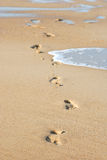 Traces on damp sand Stock Photography