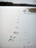 Traces dans la neige Photographie stock libre de droits