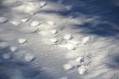 Traces de cerfs communs dans la neige Photos libres de droits