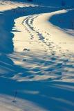 Traces de faune sur la route rurale photographie stock