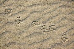 Traces de pied des mouettes dans le sable Fond avec le sable fin beige Poncez la surface sur la plage, vue d'en haut Photo libre de droits