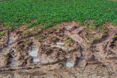 Traces de pied et marques de pneu dans la boue Photographie stock libre de droits
