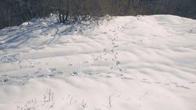 Traces des animaux dans la neige banque de vidéos