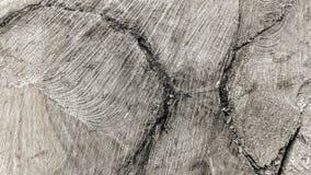 Traces des coupes sur un tronc photos stock